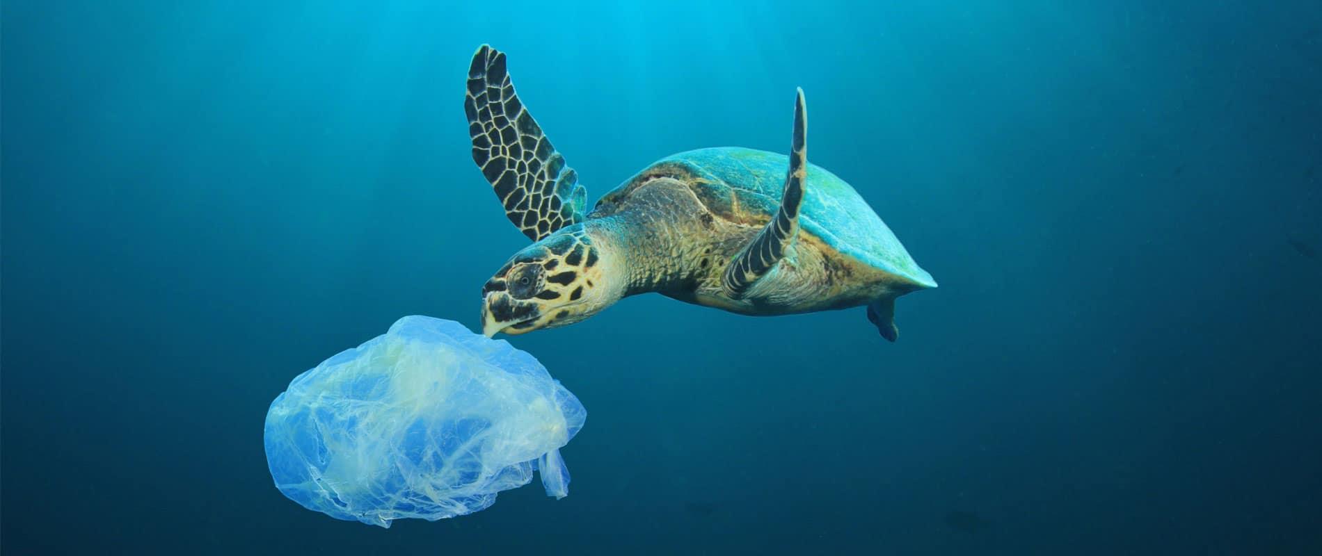 Un océan de plastique !