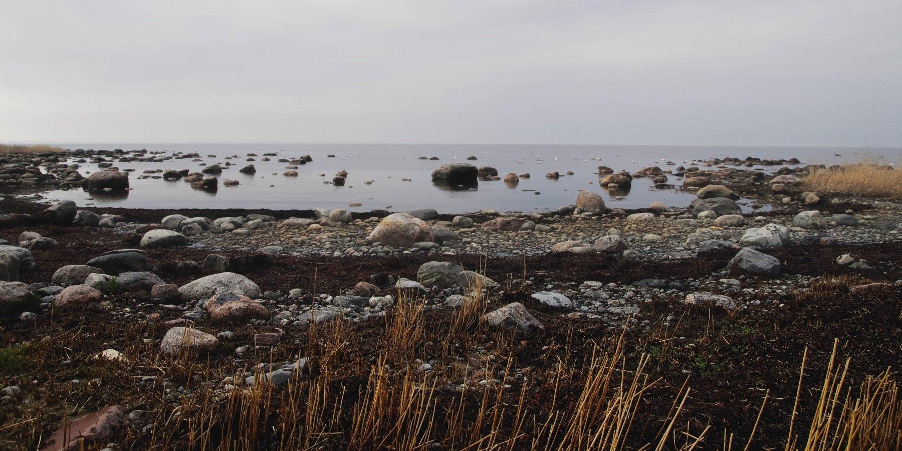 Les plantes du littoral : zoom sur la Criste marine