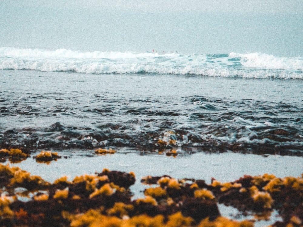 vagues qui déferlents dans l'ocean