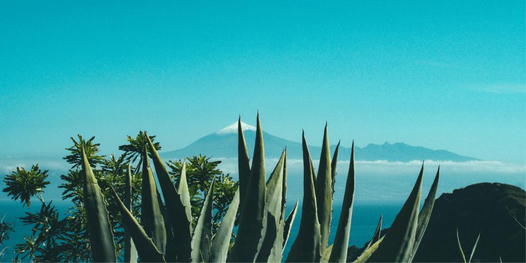 L'Aloe Vera Bio, un trésor de bienfaits pour votre peau