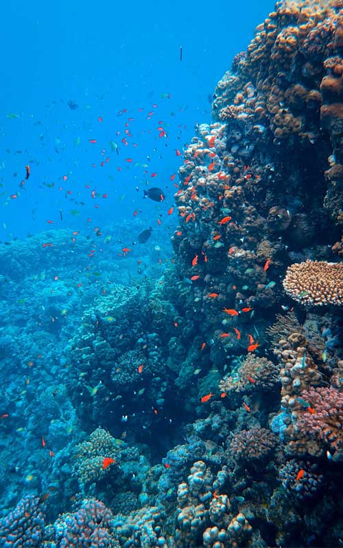 photographie corail sous l'eau