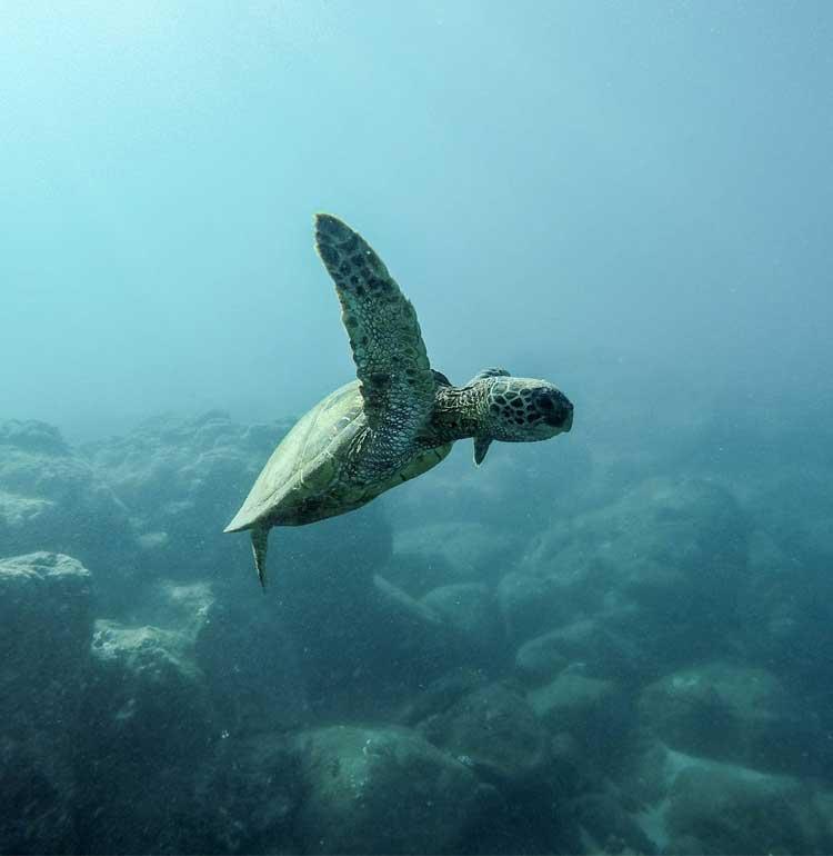 tortue qui nage sous l'eau