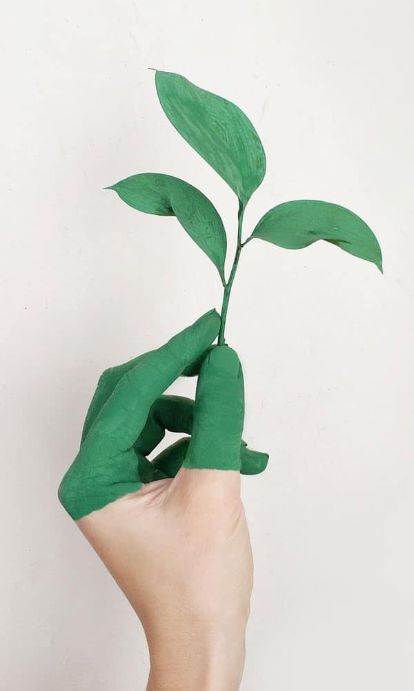 main verte qui tient feuille