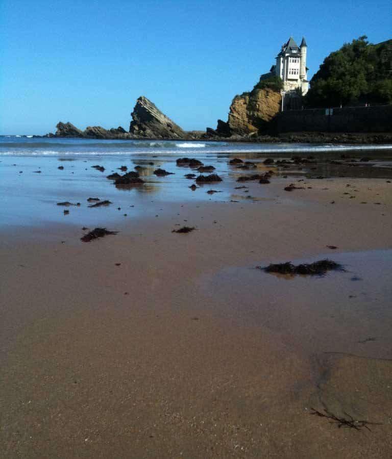 Algues rouges échoués sur le sable Biarritz